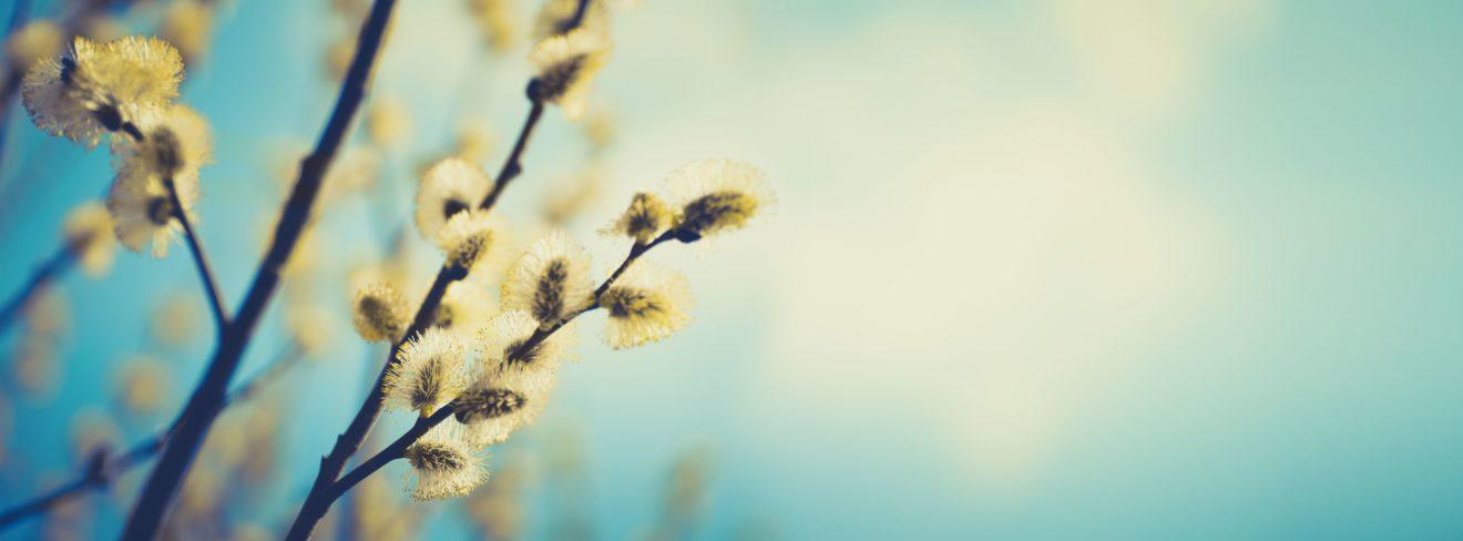 Cette photo représente une branche fleurissante